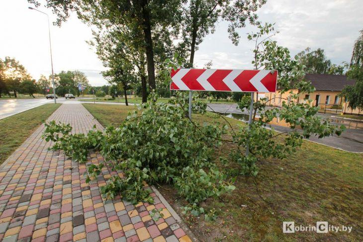 Ливень и гроза 20 июня в Кобрине повалили десятки деревьев