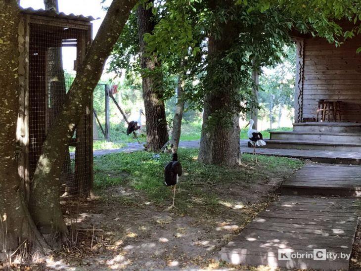 Кобрин: аиста с поврежденным крылом приютили на агроусадьбе «Мазичи»