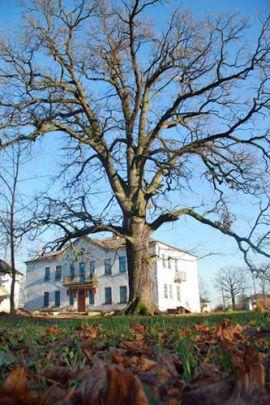 В Кобринском районе продают усадьбу писательницы Марии Родзевич: на участке растёт 500-летний дуб «Дивайтис»